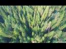 Тайга кормилица - д. Анциферово, Енисей, Сибирь