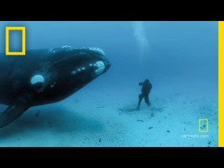 Close Encounters of the Giant Kind | National Geographic
