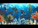 Aquariums Aquantika 3D Nasza Klasa Gallery 01 15 04 2017