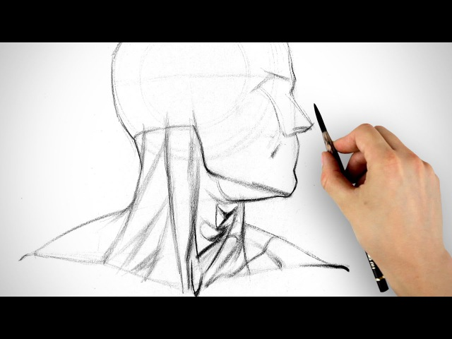 Learn to Draw the Neck - Form and Assignment Example
