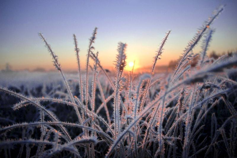 МЧС снова предупреждает о заморозках в Ростовской области