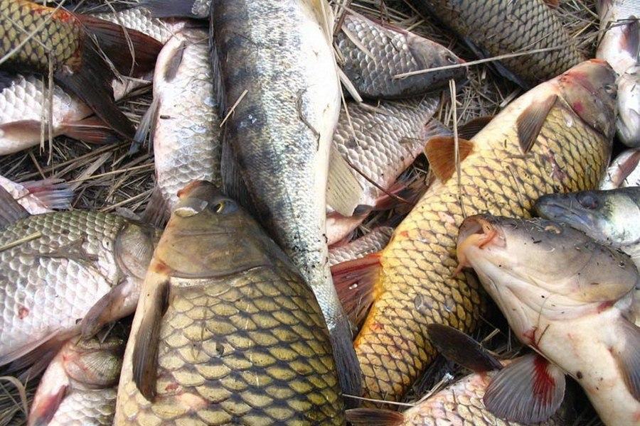 В Таганроге полицейские выявили факт незаконного вылова рыбы