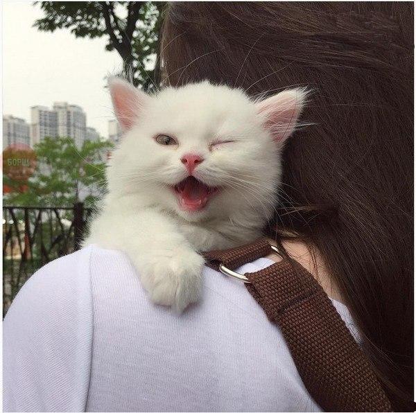 Что значит если кошка подмигивает