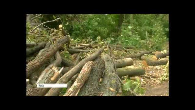 Хто і чому вирубує дерева в заповіднику Теремки