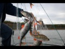 Вот это Рыбалка Нерествесна 2017Ты не поверишьЭту страну не победить 98