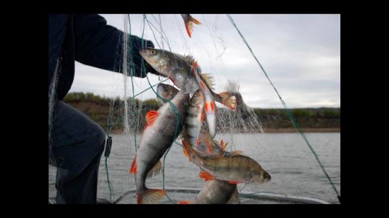 Вот это Рыбалка Нерест(весна 2017)Ты не поверишьЭту страну не победить 98