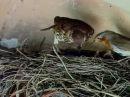 Эти загадочные животные BBC Weird Nature 5 Puzzling Partners 'nb pfufljxyst bdjnyst bbc weird nature 5 puzzling partners