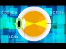 Как очки помогают нам видеть rfr jxrb gjvjuf.n yfv dbltnm
