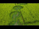 Willoughby Hedge Crop Circle 4k60p 5 5 2017 V2