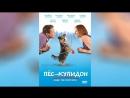Пес-купидон (2012) | Gabe the Cupid Dog
