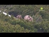 Хранители дикой природы. Природа Словакии