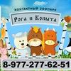 Контактный зоопарк Рога и Копыта г.Москва