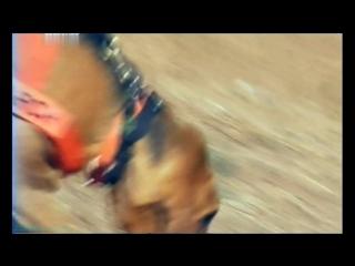 «Введение в собаковедение» (06 серия) (Научно-популярный, животные, 2008)
