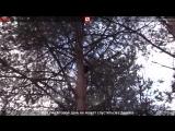 Операция по спасению кота, который уже 2 дня провел на дереве. Прямая трансляция