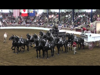 Percherons\Першерон