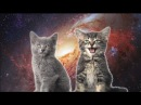 [10 Hours] Space Cats - Magic Fly (by Enjoyker) - Video Singing Cats [1080HD] SlowTV