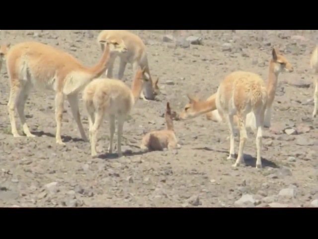 Дикая природа Экватор Южная Америка Интересный документальный фильм