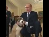 Мой лучший друг - это президент Путин!!!