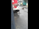 собак жжет