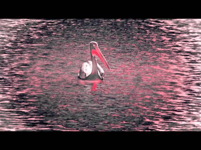 Hossein Alizadeh Djivan Gasparyan - Birds