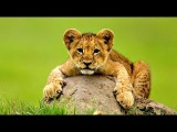 Baby lions - Benjamin Francis Leftwich - Shine (Kygo Remix)