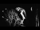 Les Pires - Совы нежные (слова Жюли Грюн)