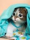 Войлочные котики
