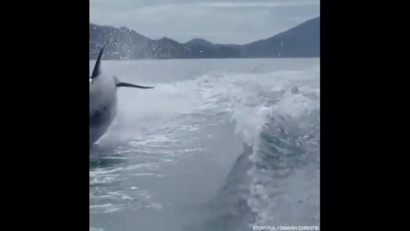 Морской патруль!