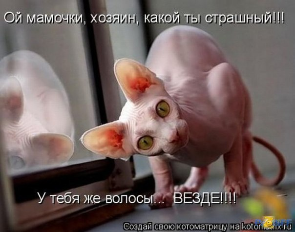 https://pp.vk.me/c637118/v637118609/4aa6/p5PuIEZN_d0.jpg