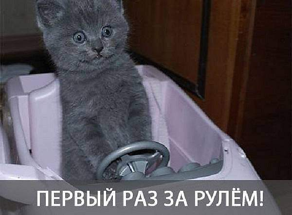 https://pp.vk.me/c637118/v637118669/3be7/VwET8XvAkE0.jpg