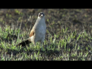Animal Planet: Великий рифт: Дикое сердце Африки. Эпизод 3: Трава (2010)