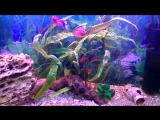 мой аквариум с  маленькими попугаями