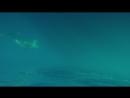 Дукат возле пролива Дарданеллы Встреча с дельфинами