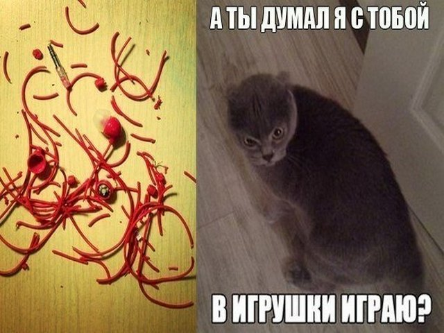 Кот порвал наушники