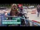 Медведь гоняет на мотоцикле по городу