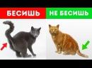 7 ПРИЗНАКОВ ЧТО ТЫ БЕСИШЬ СВОЕГО КОТА [Белый кот]