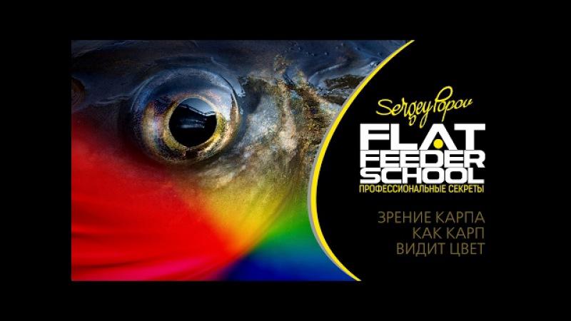 FLAT FEEDER SCHOOL - Зрение карпа, как карп видит цвет
