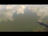 Сазан на мормышку. Чемпионат НСО по ловле спиннингом с берега (22-23 июля) Барлак.