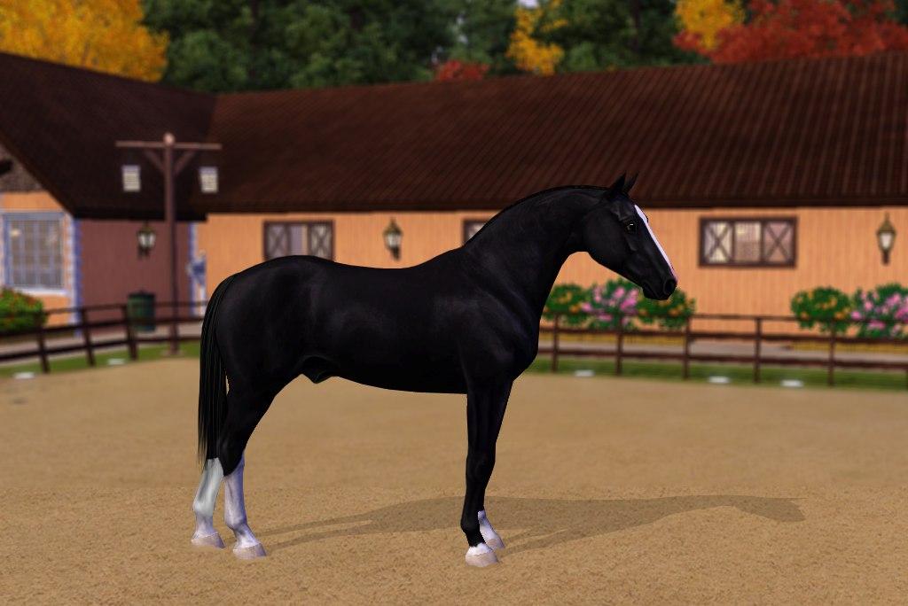 Регистрация лошадей в RHF 2 - Страница 3 XbfeM6HLsMM