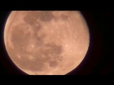 Video allegedly shows large group of UFOs leaving the moon