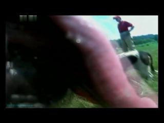 «Введение в собаковедение» (02 серия) (Научно-популярный, животные, 2008)