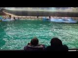 Дельфинарий на Крестовском (2)