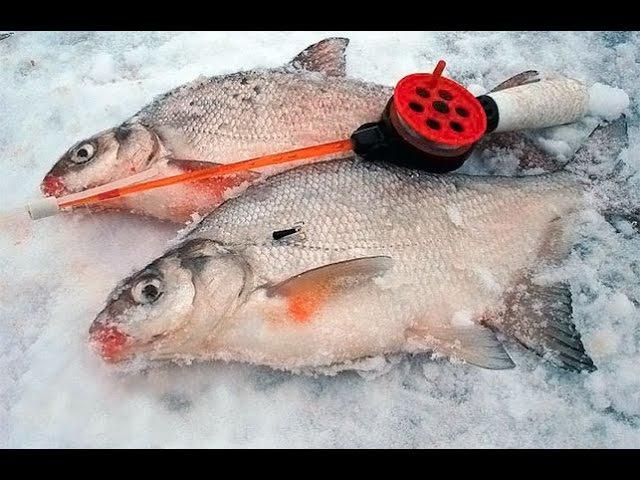 Зимняя рыбалка. Уроки ловли леща на чертика от профи.