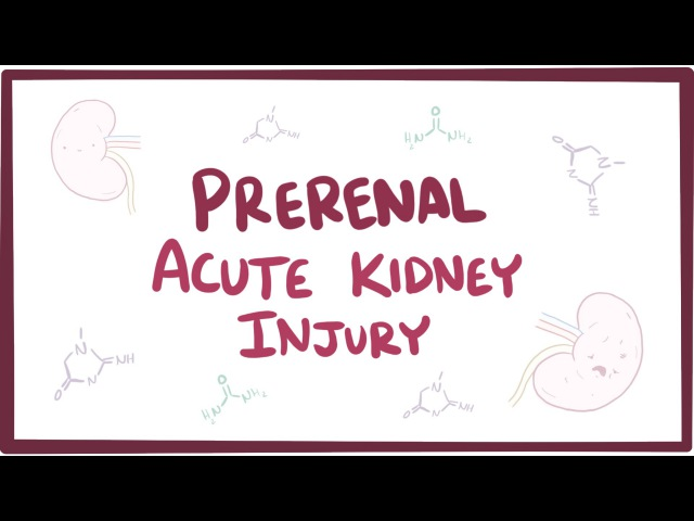 Prerenal acute kidney injury (acute renal failure) - causes, symptoms pathology