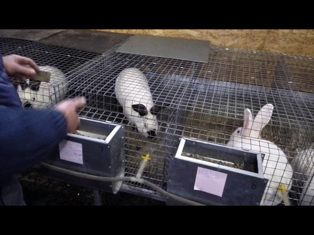 Кролики. Разделение мочи от навоза