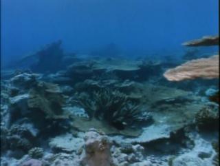 03.1967 Коралловые джунгли (Подводная одиссея команды Кусто)