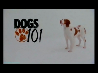 «Введение в собаковедение» (11 серия) (Научно-популярный, животные, 2009)