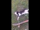 чоткий кот