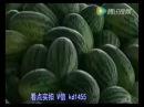 Арбузы из Китая