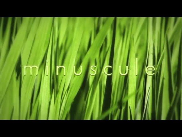 Букашки - Сезон 2 (15 минут) 2